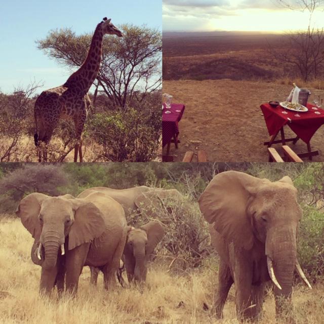Afrika Safari Urlaub buchen Bielefeld